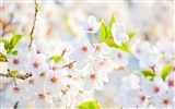 Title:Flowers spring bloom-Flowers photography wallpaper Views:1293