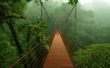 Title:Tropical forest bridge-2016 High Quality Wallpaper Views:825
