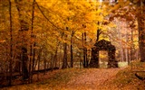 Title:2016 Autumn Forest Nature Scenery HD Wallpaper Views:2629