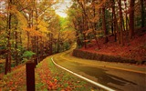 Title:Autumn forest road turn-2016 Scenery HD Wallpaper Views:1013