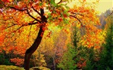 Title:Autumn forest trees-2016 Scenery HD Wallpaper Views:1101