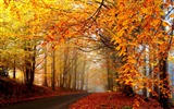 Title:Autumn leaves trees road fog-2016 Scenery HD Wallpaper Views:1070