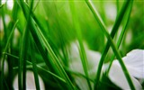 Title:Grass herbs blur leaves-Plants Macro HD Wallpaper Views:750