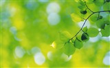 Title:Green leaf branch bokeh-Plants Macro HD Wallpaper Views:695