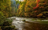 Title:Harz germany autumn river trees-2016 Scenery HD Wallpaper Views:1122