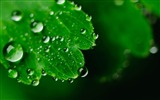 Title:Leaves drops face carved-Plants Macro HD Wallpaper Views:506