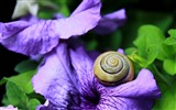 Title:Snail clam flower shell-2016 High Quality HD Wallpaper Views:1491