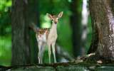 Title:Cute deer forest-Animal High Quality Wallpaper Views:1194