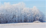 Title:Winter forest snow trees-Scenery High Quality Wallpaper Views:559