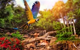Title:Yellow blue parrot flying-Animal High Quality Wallpaper Views:1282