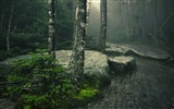 Title:Dark forest-2016 High Quality HD Wallpaper Views:1144