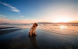 Title:Dog sea sitting shore-2016 High Quality HD Wallpaper Views:477