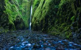 Title:Oregon Gorge Waterfall Oneonta-Nature High Quality Wallpaper Views:705
