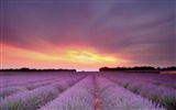 Title:Sky Field Flowers Sunset Lavender-Travel HD Wallpaper Views:825