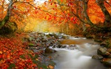 Title:Stream in autumn deciduous forest-Nature High Quality Wallpaper Views:556