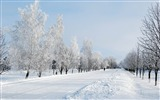 Title:Winter snow road avenue trees person-2016 Nature HD Wallpaper Views:757