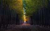 Title:Autumn forest trees road-Nature Scenery Wallpaper Views:328