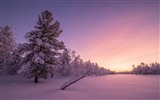 Title:Frosty sunrise forest-World Travel HD Wallpaper Views:992
