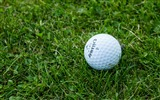 Title:Golf ball grass-2016 High Quality HD Wallpaper Views:310