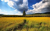 Title:High grass in the field-Nature Scenery Wallpaper Views:276