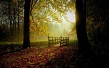Title:Jungle Sunny fall day-Nature Scenery Wallpaper Views:276