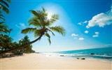 Title:Sea sand palm trees surf-Nature Scenery Wallpaper Views:287