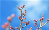 Title:Spring flower buds-Flowers Photo HD Wallpaper Views:271
