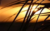 Title:Cape verde sunset palm tree-Life Photography HD Wallpaper Views:308