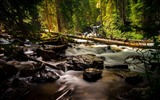 Title:River with woods and rocks in the forest-2016 Scenery High Quality Wallpaper Views:137