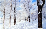 Title:Winter forest snow-Scenery HD Wallpaper Views:834