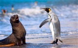 Title:Antarctic continent penguin animal wallpaper 02 Views:579
