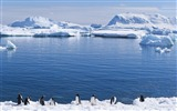 Title:Antarctic continent penguin animal wallpaper 06 Views:582