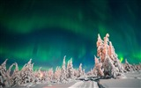 Title:Aurora borealis winter forest snow-High Quality Wallpaper Views:867