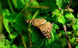 Title:Butterfly Macro Green Leaves-High Quality HD Wallpaper Views:479