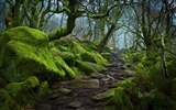 Title:England Forest path in Padley Gorge in Derbyshire-2017 Bing Desktop Wallpaper Views:614