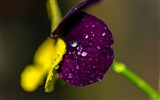 Title:Leaf drops close up-High Quality HD Wallpaper Views:487