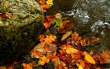 Title:Autumn leaves water-Windows 10 Desktop Wallpaper Views:592