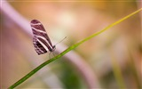 Title:Butterfly wings close up-2017 High Quality Wallpaper Views:986