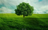 Title:Green tree alone-2017 High Quality Wallpaper Views:433