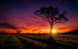Title:Nature sunset scenery-2017 High Quality Wallpaper Views:834