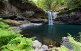Title:Coquille river waterfall forest-Nature Scenery Wallpaper Views:771