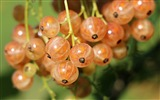 Title:Currants berries close up-Food Theme HD Wallpaper Views:577