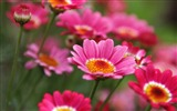 Title:Pink Wildflower-2017 Spring Photo HD Wallpaper Views:823