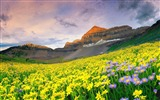 Title:Canyon valley flowers-Beautiful landscape wallpaper Views:550