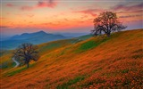 Title:Orange flowers field-Beautiful landscape wallpaper Views:551