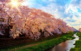 Title:Spring river in japan-Beautiful landscape wallpaper Views:625